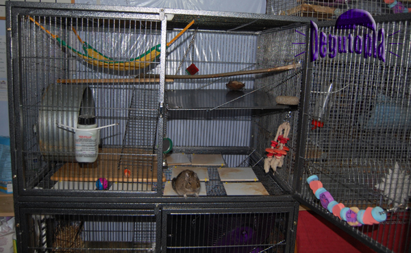 One of Degutopia's more recent cages, The Hazels (top half)
